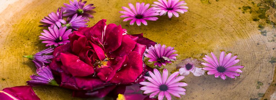Ibiza Blumen
