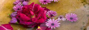 Pink und lila Blumen im Wasser